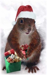 xmassquirrel